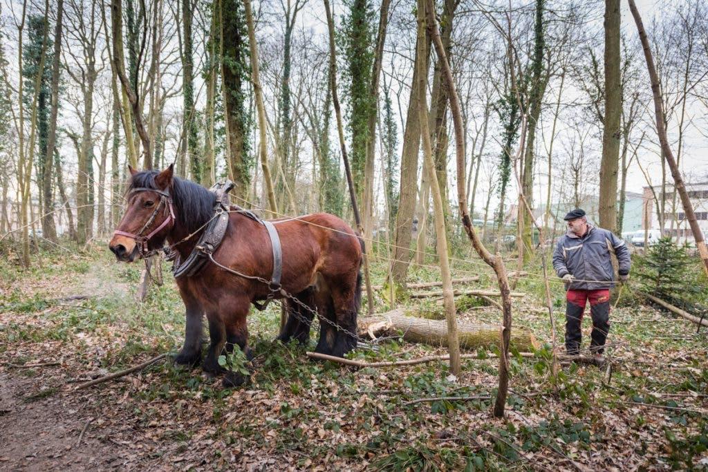 Personne qui travail avec un cheval dans la forêt